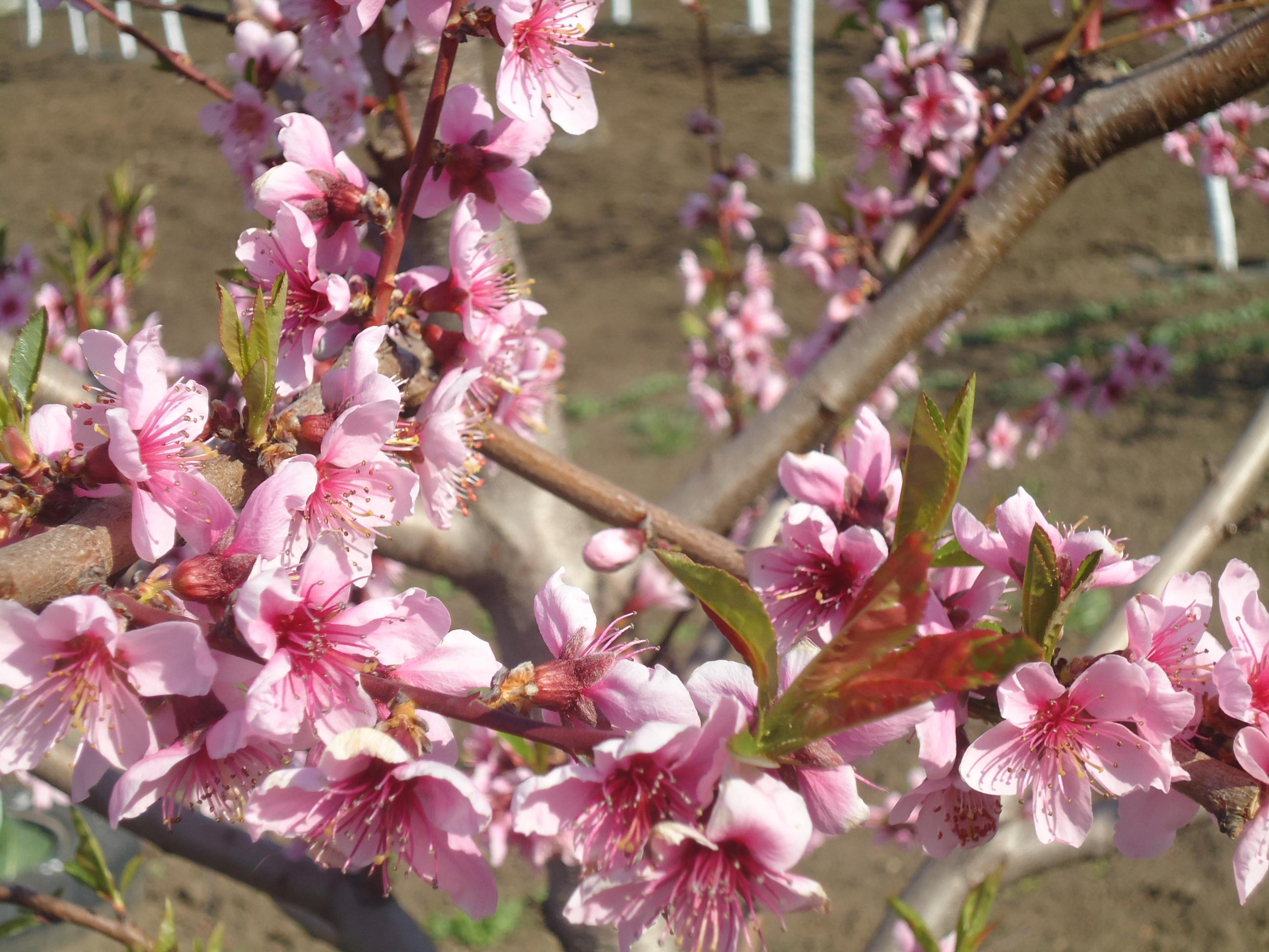 Primăvară
